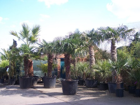 Hyde Cottage Palms & Exotics